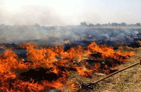 fir on farmer who set fire in parali
