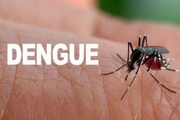 dengue havoc in bhopal 4 patients died