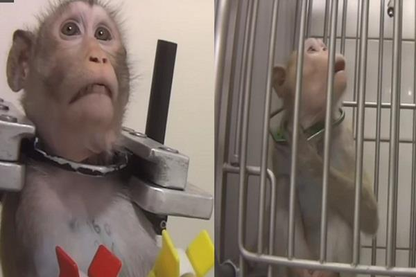 social media germany monkey social media medicine