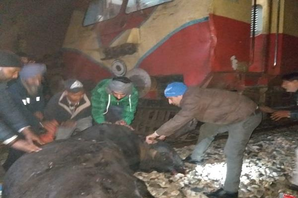cattle hits with dmu died