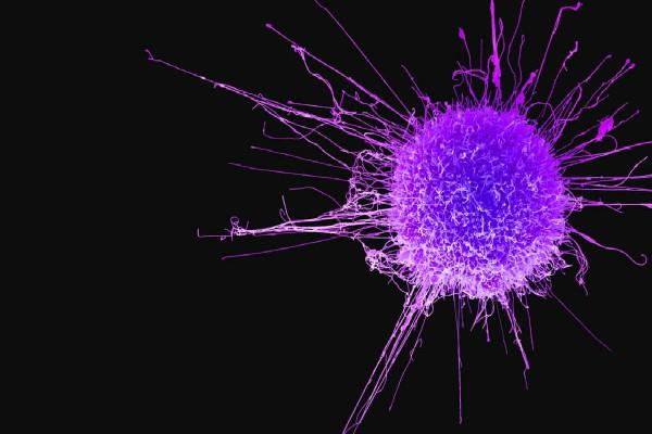 cancer increases due to changes in junk dna and genes
