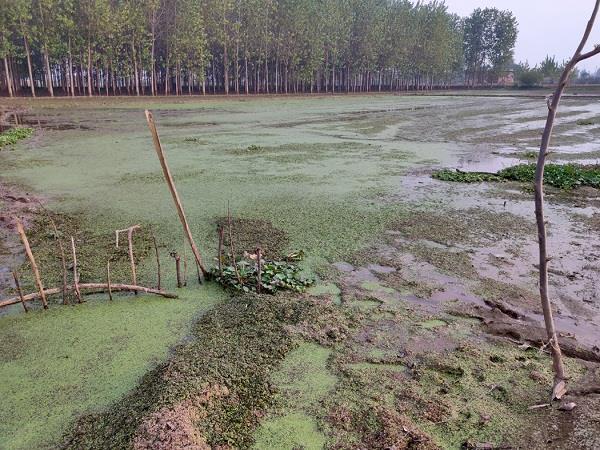 dirty water in fields