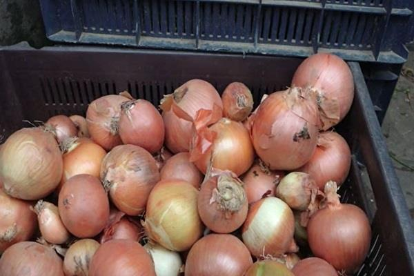 foreign onion has come to increase the flavor of the vegetable