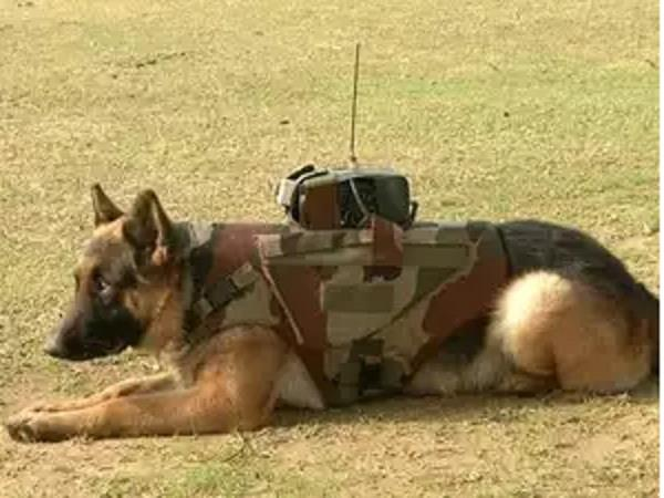 meena and roma have saved the lives of many soldiers