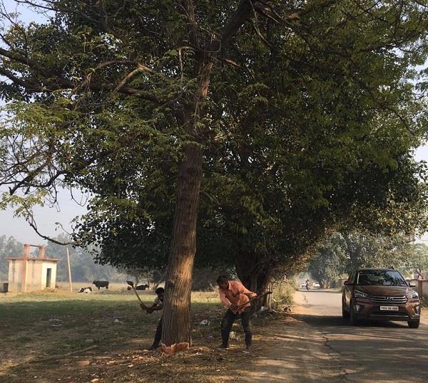 green trees cut