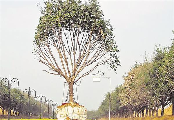 corporation auctioned green tree