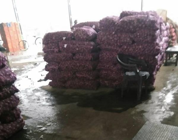 millions of onions have been wasted due to rain