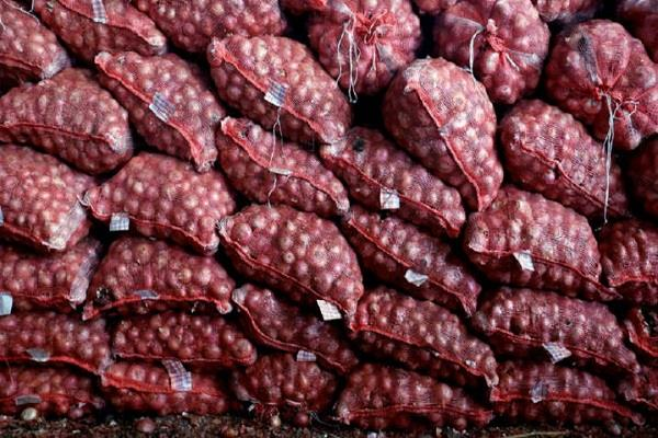 government awarded 12 660 ton onion import contract