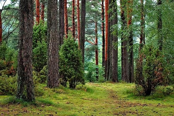 1 09 crore trees were cut in last five years ministry of environment