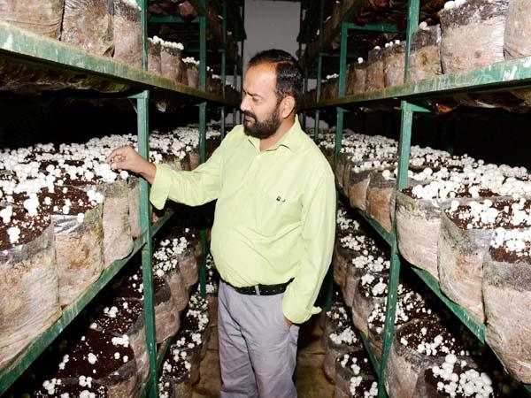 adopted mushroom business leaving government job