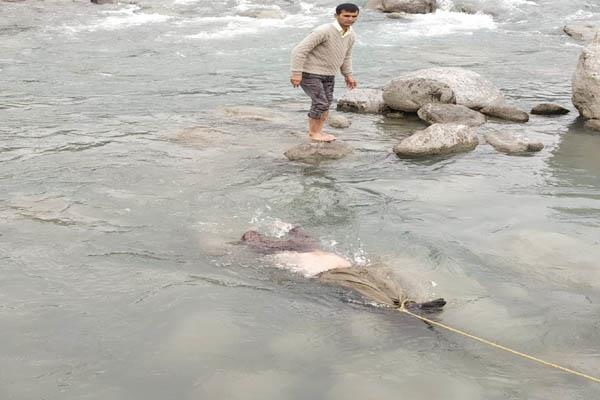 chamba ravi river person suicide