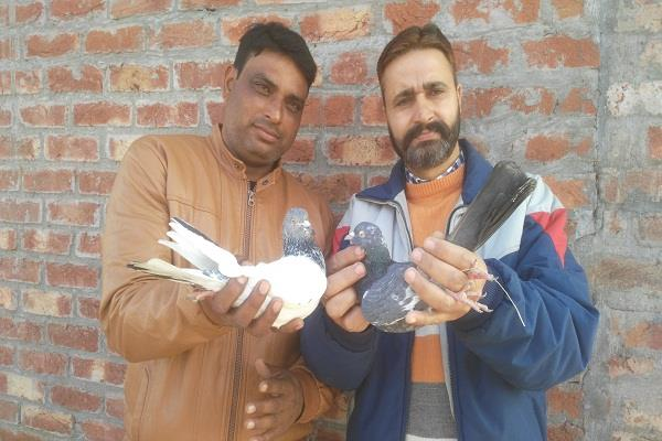 pakistani lela love with indiana majnu