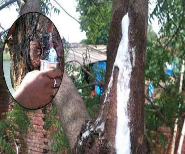 sweet water coming out of neem tree wonders are filled with bottles in rural