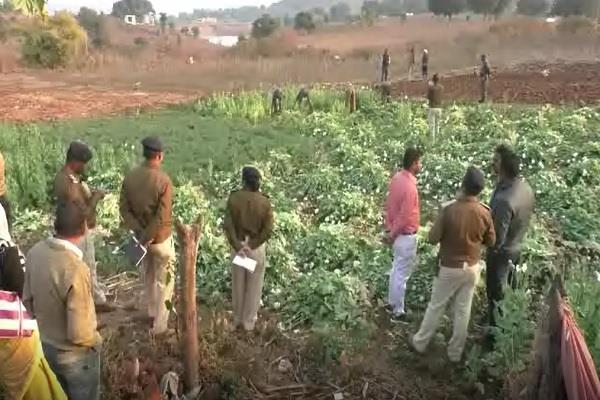 police s big success opium farming busted