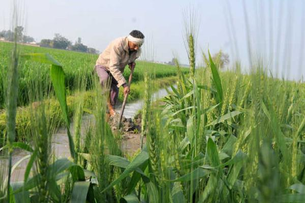 bjp will make a survey of poor crop of farmers in mp