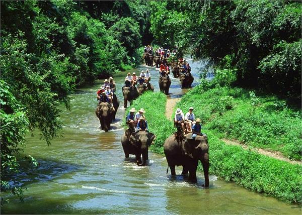 ओडिशा के 6 खूबसूरत वाइल्डलाइफ सेंचुरी, जरूर जाएं देखने