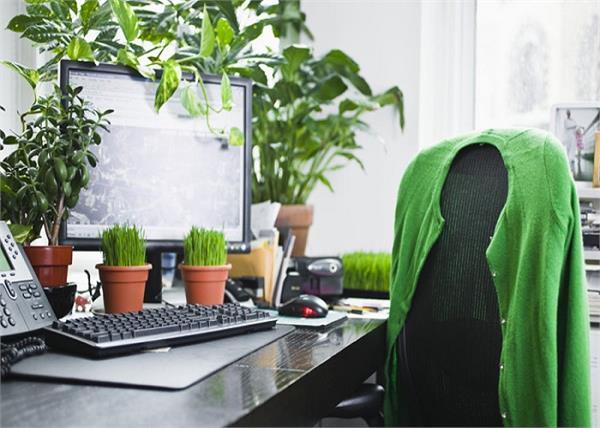 ऑफिस में पौधे लगाने के फायदे व तरीके