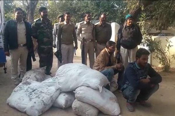 forest department s big success 2 smugglers arrested with millions of gum
