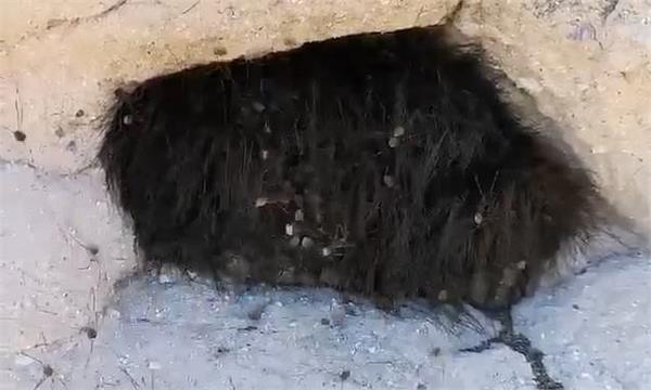 prods furry animal with a stick and it erupts into thousand spiders