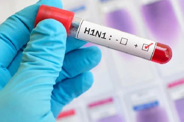 swine flu in haryana three died in pgi