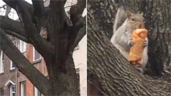 egg roll eating squirrel becomes nyc s latest viral rodent