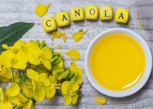 सेहत और ब्यूटी दोनों के लिए जरूरी है Canola Oil, जानें इसके 10 बड़े फायदे