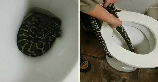 woman bitten by snake hiding in toilet