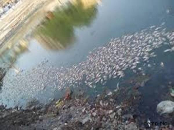 thousands of fishes suddenly killed in bijasan pond
