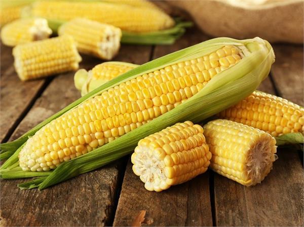 रोजाना Corn खाने से सेहत को मिलेंगे ये 8 फायदे