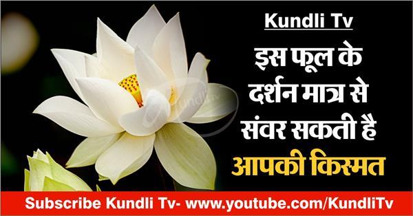 according to astrology white lotus benefits