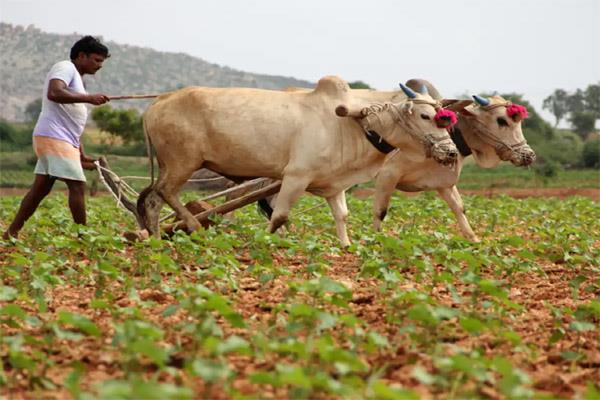 increasing the possibility of rain fed farming can reach 7 8 of the