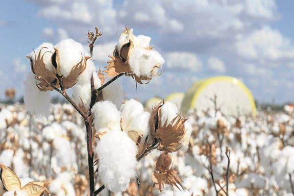 cotton exports from india and possibility to increase imports