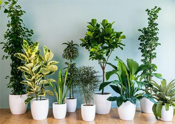 वास्तु के हिसाब से भी लगाए पौधे, नहीं होगी पैसों की किल्लत