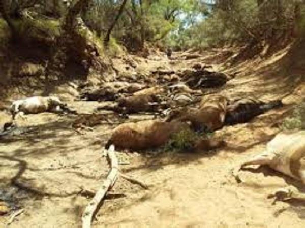 extreme heatwave in australia kills 90 wild horses