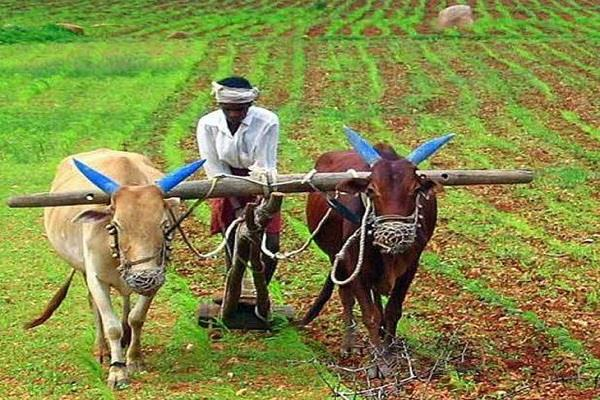 lok sabha elections will farmers become  king maker