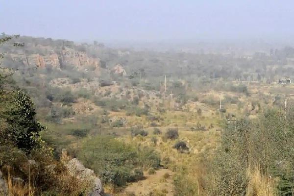 haryana hindi news arawali report