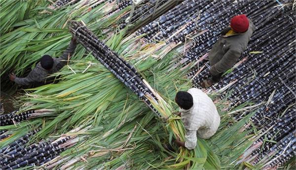uttar pradesh s perennial sugarcane