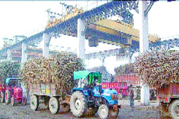 2 2 sugarcane trunks on a slip grab two workers