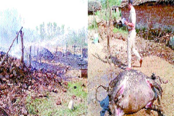 the fire in the roof 7 buffaloes and 20 goats burnt alive