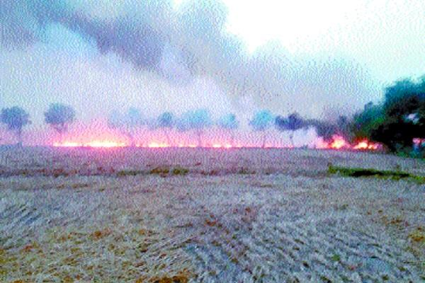 wheat harvesting ashes