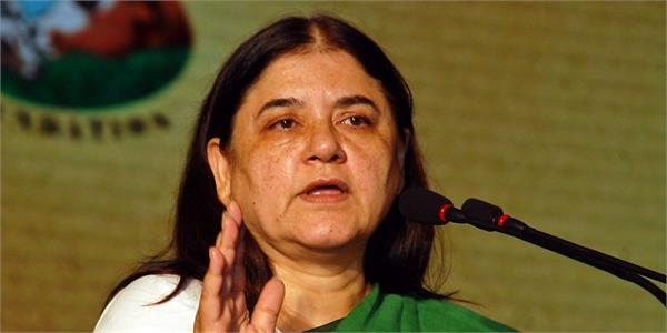 maneka threatens voters again