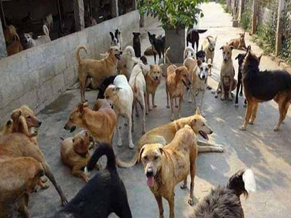 people here are troubled by the horror of the stray dogs