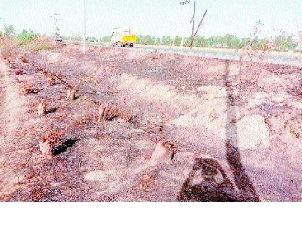 an ax on greenery 10000 trees cut in name of extension of roads
