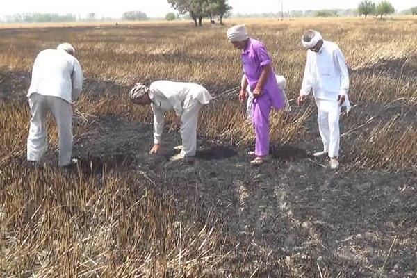 fire in fields 25 acre crops burnt