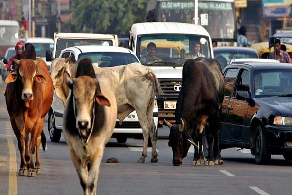 up bjp can face costly problems of livestock