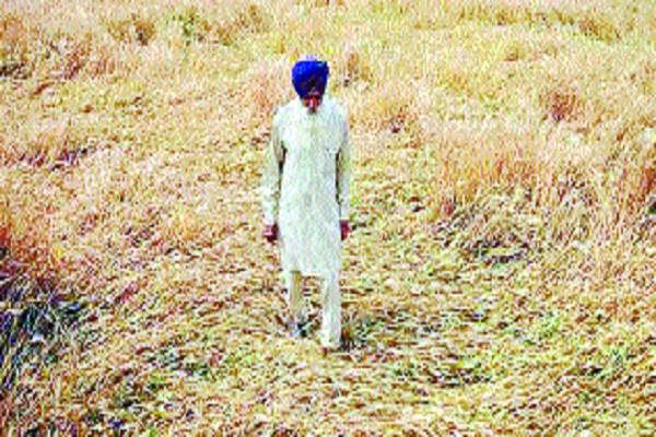 rain and hail storms in 1003 villages in the state
