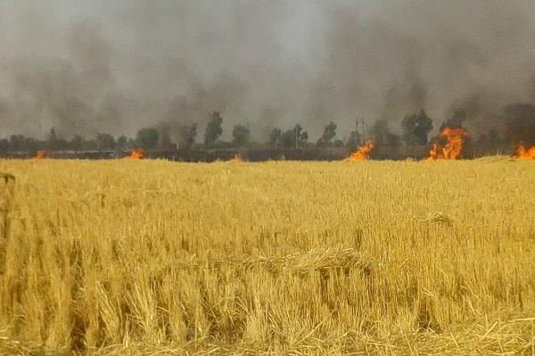identity of 255 farmers who burnt the remains of wheat