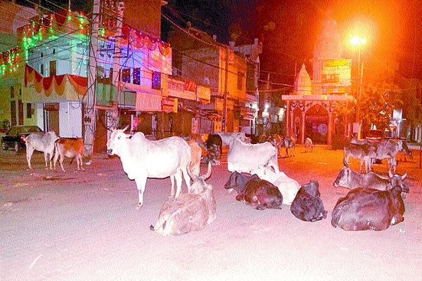 administration launches campaign to catch destitute animals