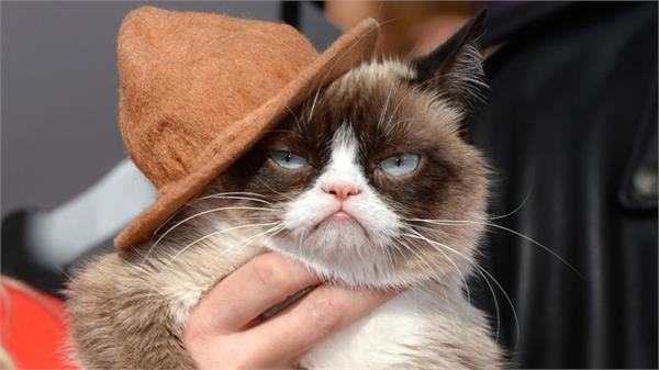 grumpy cat dies at the age of seven
