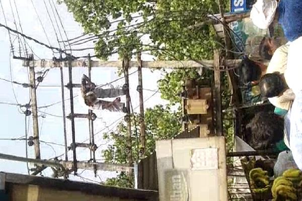 employee swinging due to electric current on transformer
